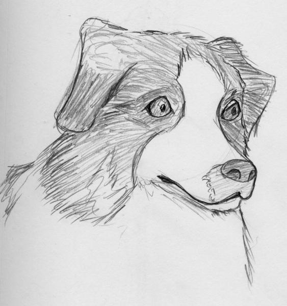 Dog: A dog... unfinished.  I think this might have been one of my first attempts with different pencil weights.