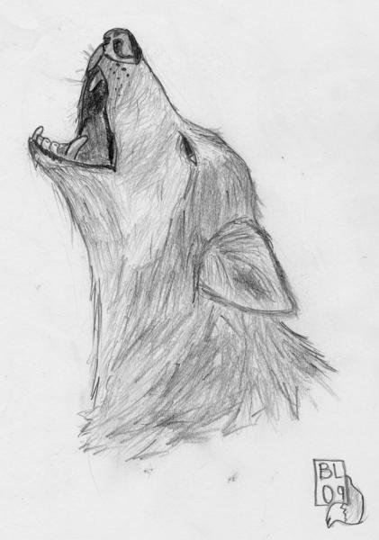 Howling Wolf: A howling wolf.  One of my favorite drawings.